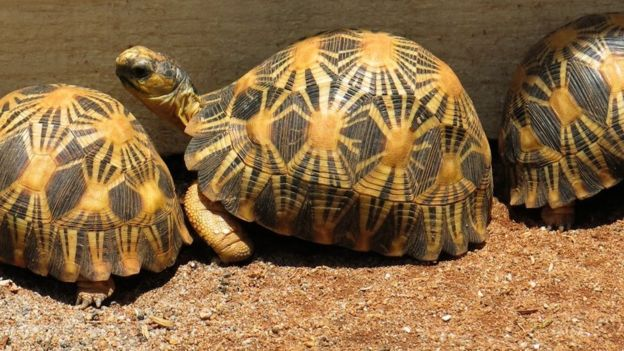 Top Secret Tortoise Sanctuary In Madagascar Works To End