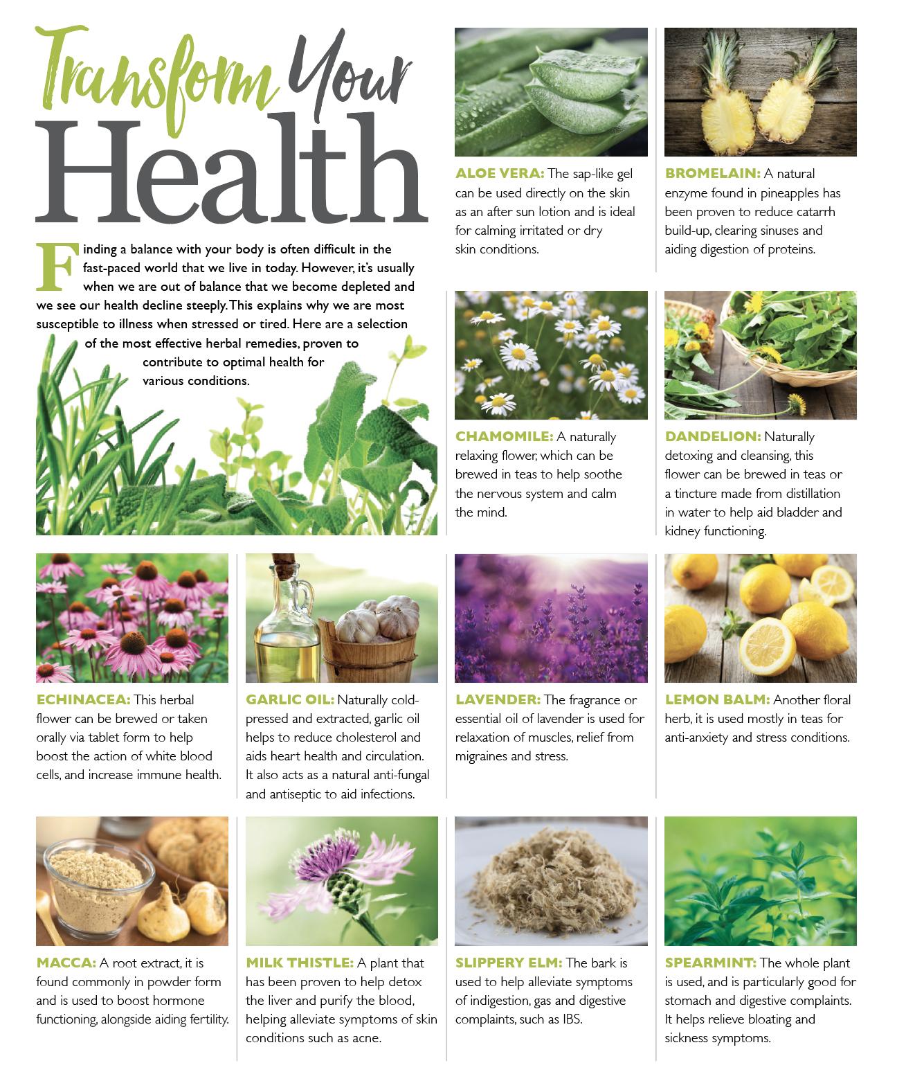 Unlock the healing benefits of herbs