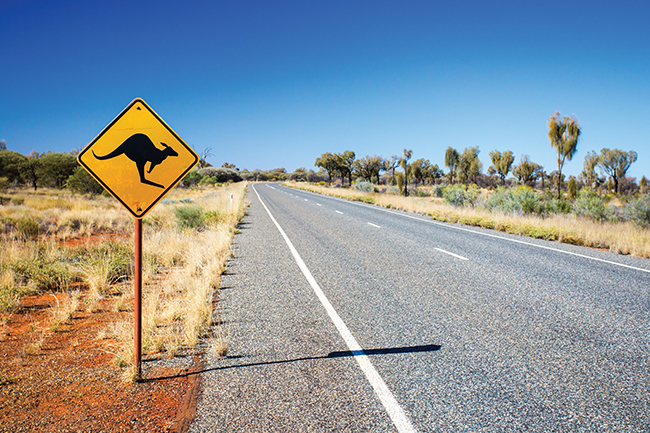 Death in the outback: The hidden kangaroo killing industry