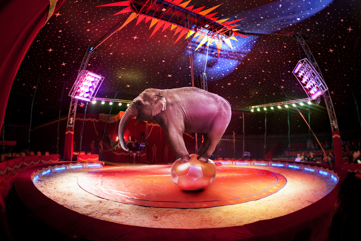 Scotland has banned the use of wild animals in travelling circuses