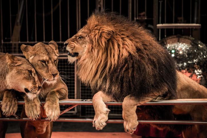 England circus ban