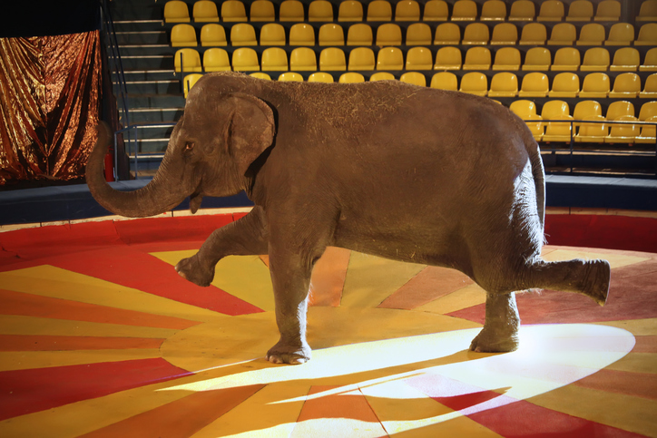 uk circus animal ban