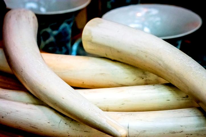 britain ivory ban