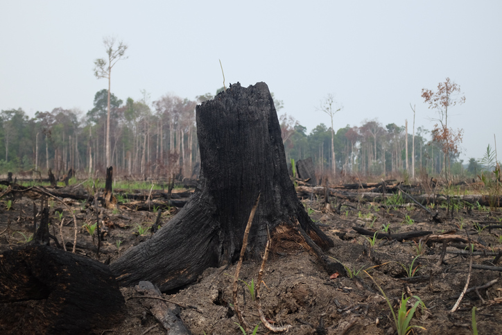 iceland remove palm oil