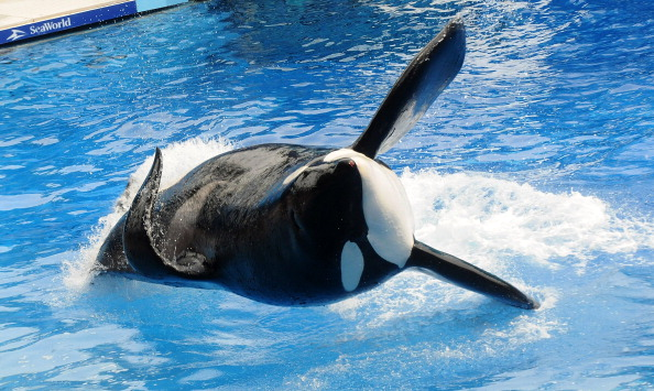 thomas cook stops selling tickets to seaworld