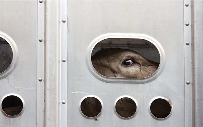 live animal transport uk