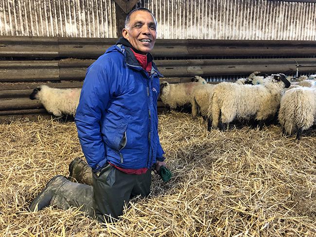 farmer sends lambs to animal sanctuaries