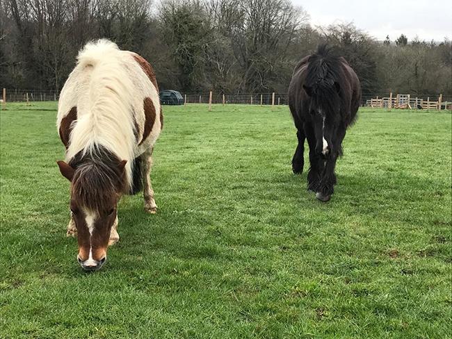 rescued ponies reunited