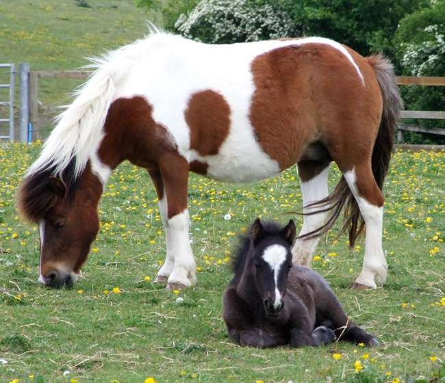 Rescued ponies reunited after six years at animal sanctuary
