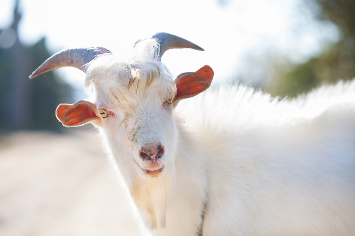 h&m stops selling cashmere