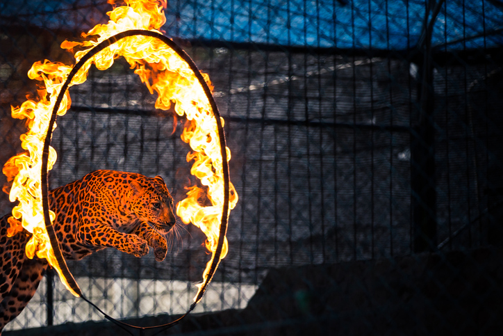 uk bans animal circuses