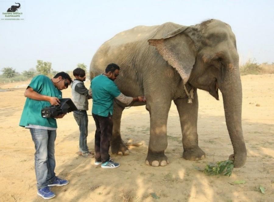 india's first elephant hospital