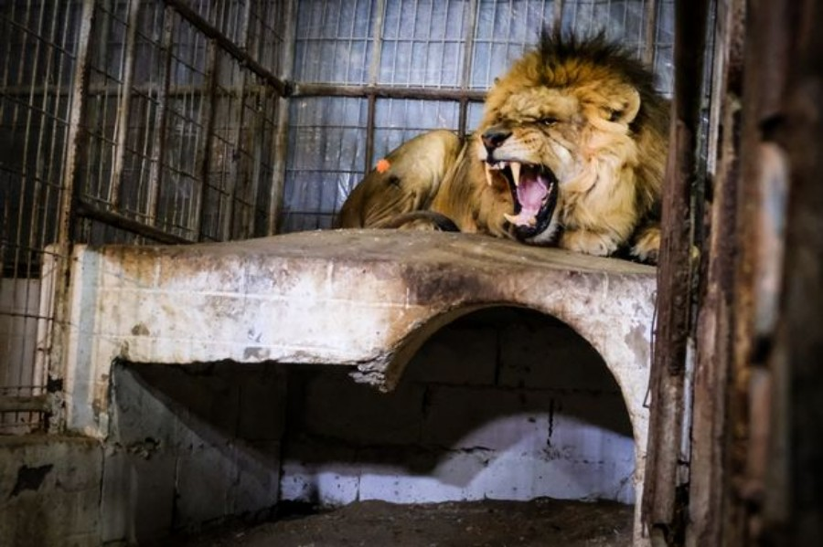 animals rescued from gaza zoo