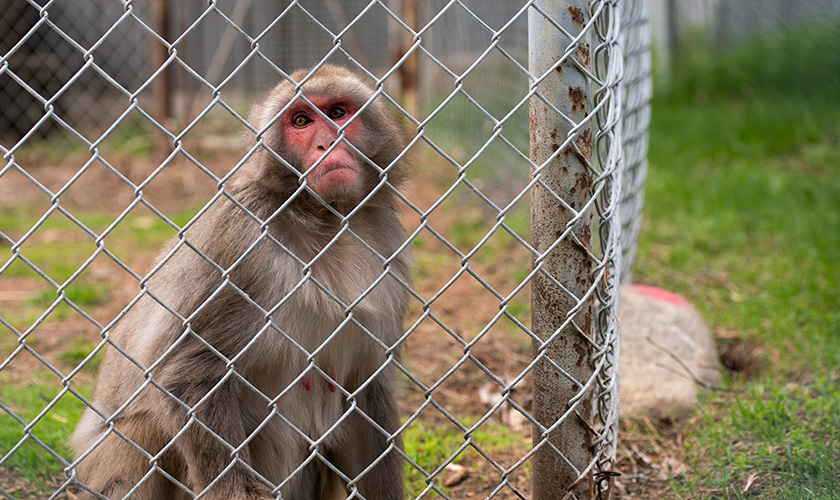 animals rescued from roadside zoo in canada