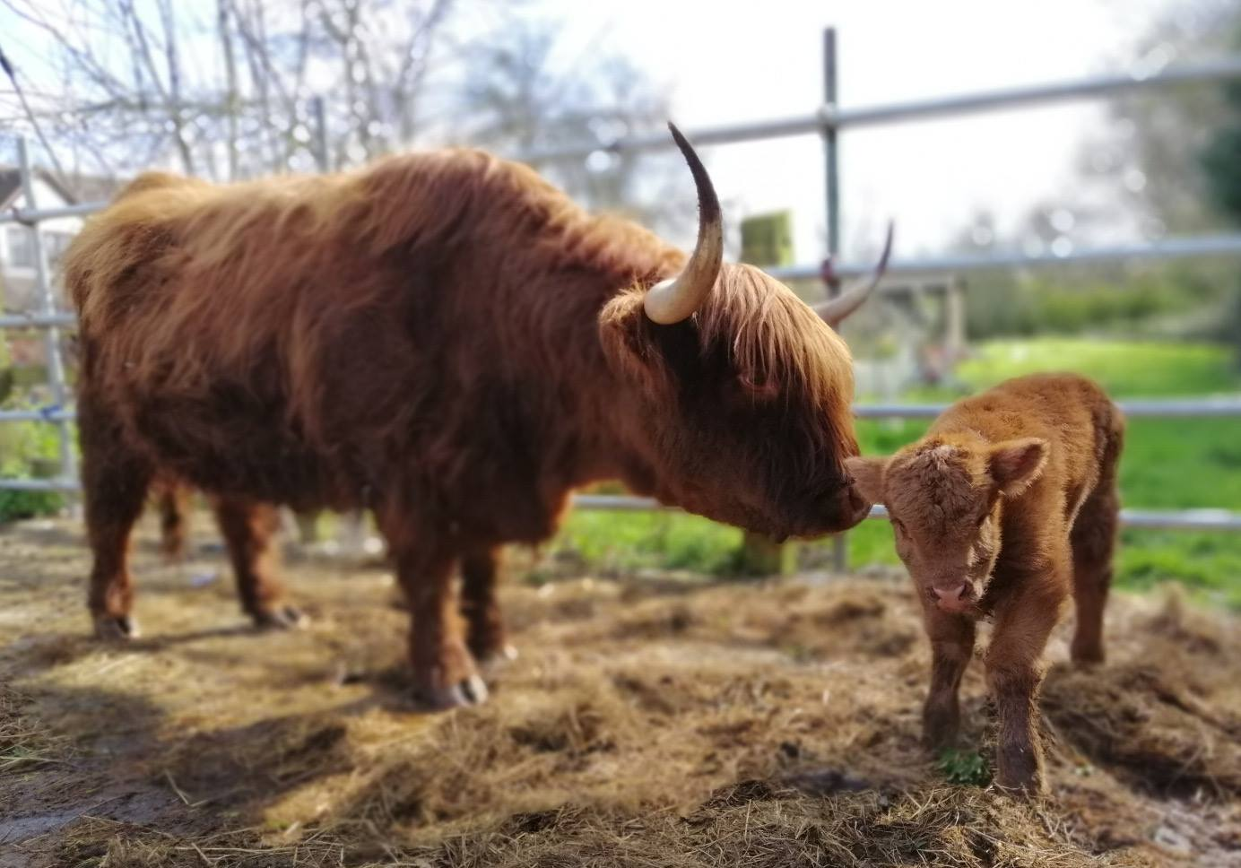 fiona oakes farm sanctuary closing