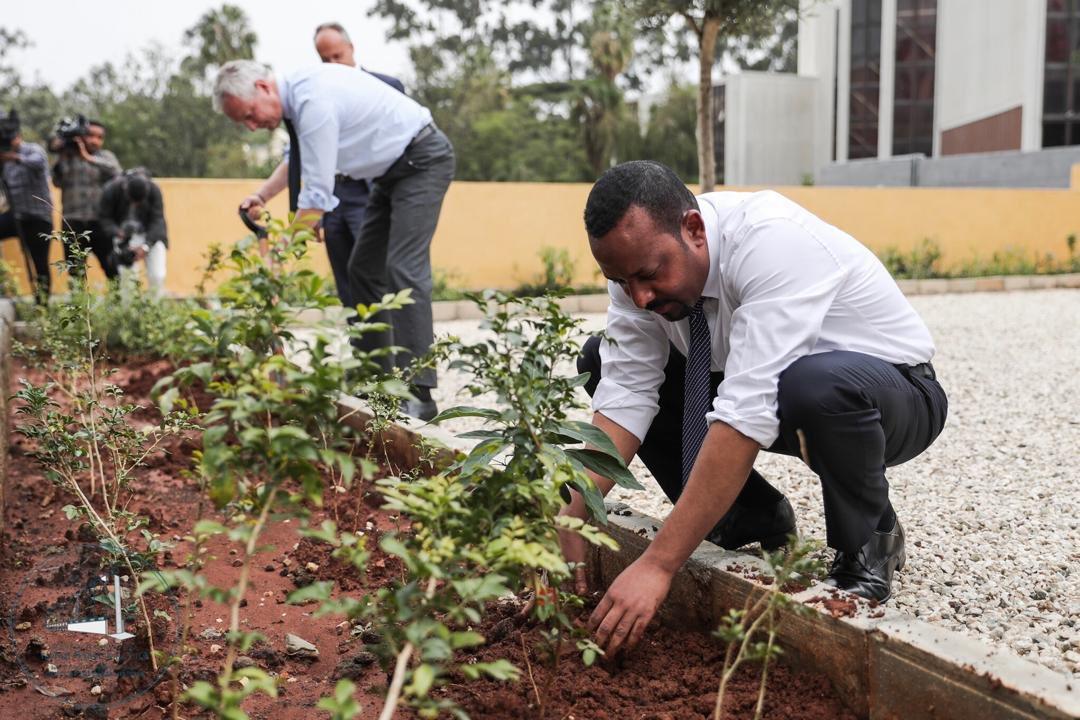 Ethiopia plants 350 million trees
