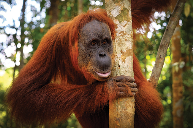 should we avoid palm oil