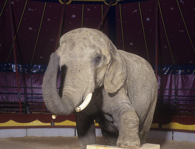 animal circus ban uk