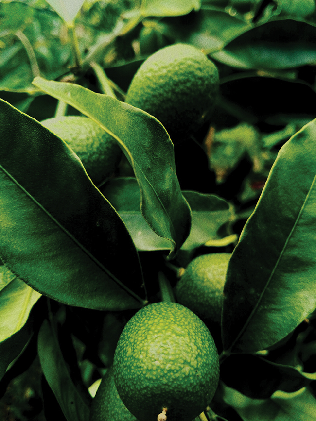 are avocados damaging the environment