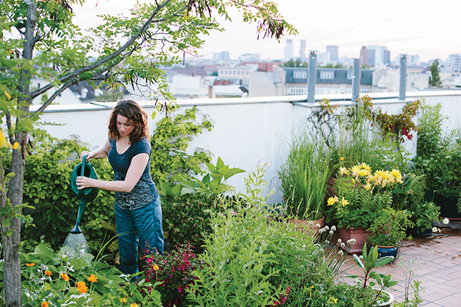 how to create a wildlife haven in the city