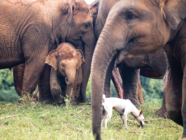 unbound project animal sanctuaries