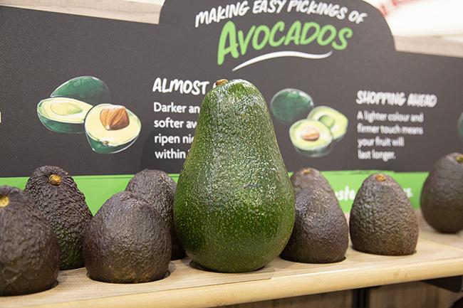 morrisons 1kg avocado