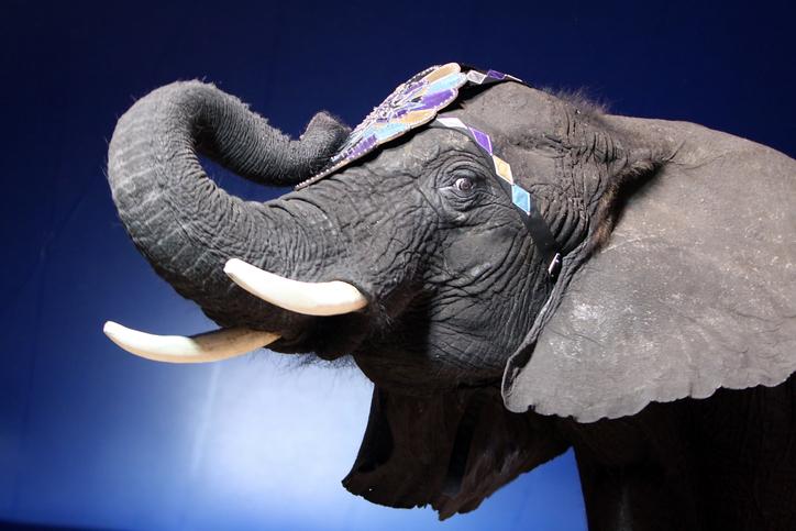 paris bans wild animal circuses